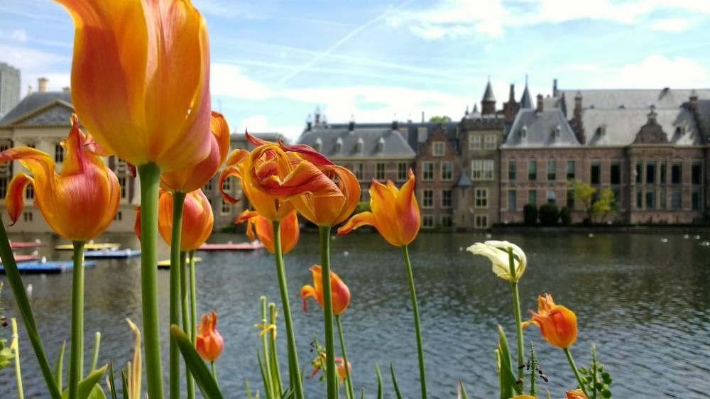 Dagarrangement Den Haag